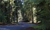 LID Roads