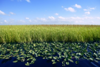 Image of Restore Wetlands for proper land management - Land Technologies